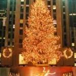 Xmas Tree at Rockefeller Center Photo 1